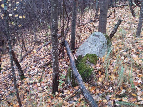 На полях встречаются камни